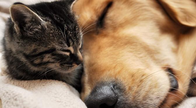 Daganatos kutyák, macskák gyógykezelése a Budafoki Állatgyógyásztai Központ onkológiai szakrendelésén.