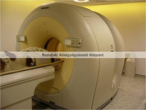 3. kép: Egésztest 18FDG PET/CT vizsgálat nagytestű kutyán onkológiai betegség diagnózisa céljából.