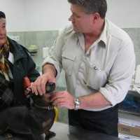 Dr. Balogh Lajos onkológus állatorvos